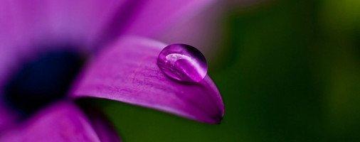 陈建新:摘一朵紫色的梦中花 - 雪漠 -